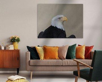 Porträt Nahaufnahme Amerikanischer Weißkopfseeadler von Maurice Dawson