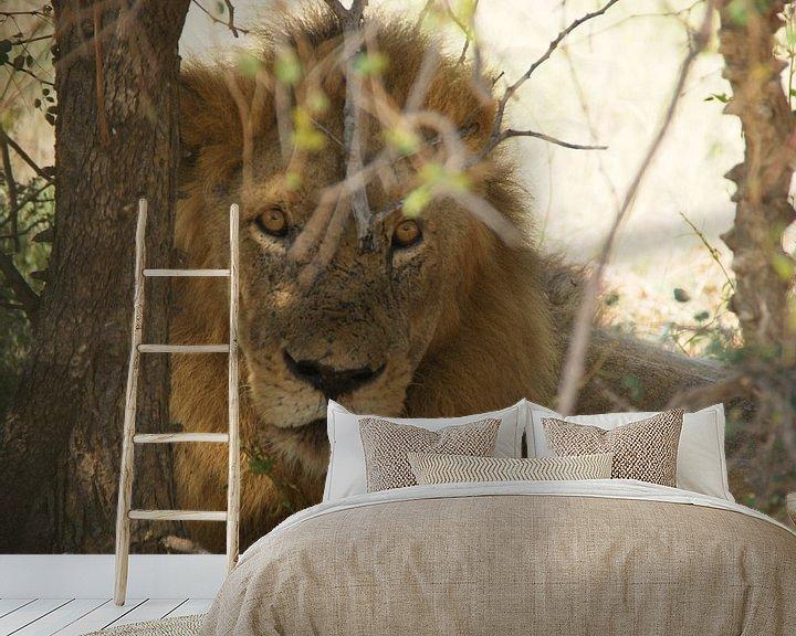 Beispiel fototapete: Löwe in Südafrika von Johnno de Jong