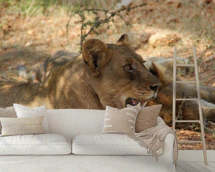 Beispiel fototapete: Löwin knurrt im Rudel von Johnno de Jong