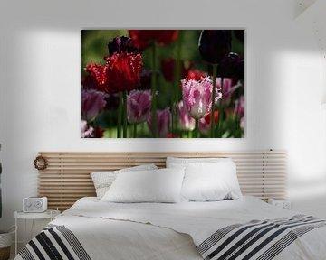 Tulpen von PuurLuuc