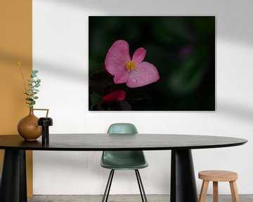 Rosa Herbst von Wendy Drent
