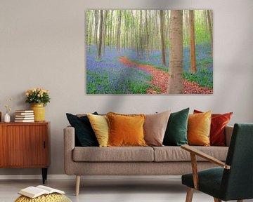 Pfad durch einen Buchenwald mit Bluebell-Blüten von Sjoerd van der Wal