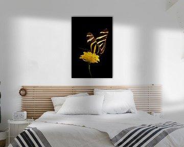 Papillon jaune noir sur Guido Heijnen