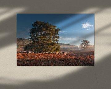 Troupeau de moutons à Brunssummerheide pendant un lever de soleil brumeux sur John van de Gazelle