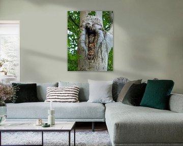 2 Eulen in Baum mit Herzform von Leopold Pleijsier