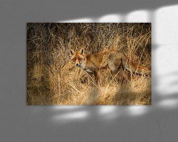 Portret van een vos von Robert Stienstra