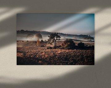 Mistige Posbank bij zonsopkomst (Herikhuizerveld) van Robbert van Rijsewijk