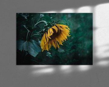 Traurige Sonnenblume von iris hensen