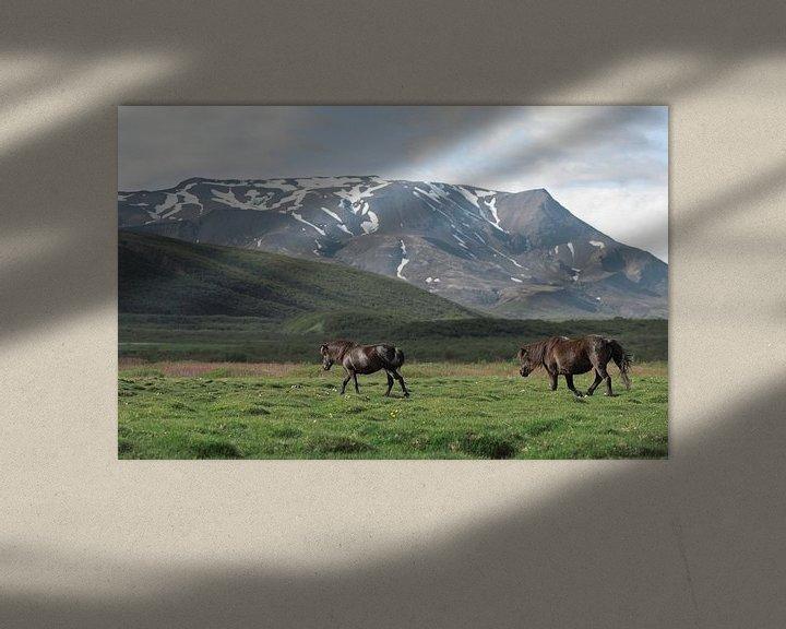 Sfeerimpressie: IJslands paard in IJsland van iris hensen