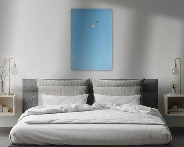 Zeemeeuw in blauwe lucht van Kevin IJpelaar