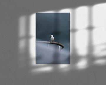 Möwe am dunklen Himmel von Kevin IJpelaar