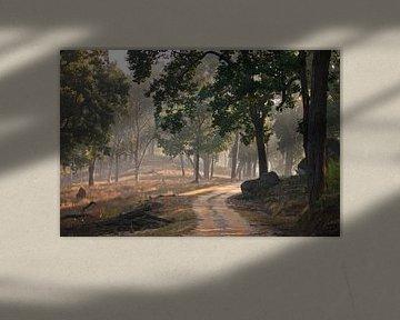 Mooi zonnig bos, lichtbundels schuin geplaatst van Michael Semenov