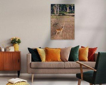 Schönes Großwildhorn-Hirsch und Gras. von Michael Semenov