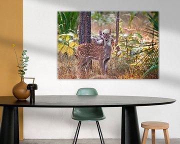 Niedliche junge Hirsche im Wald von Michael Semenov