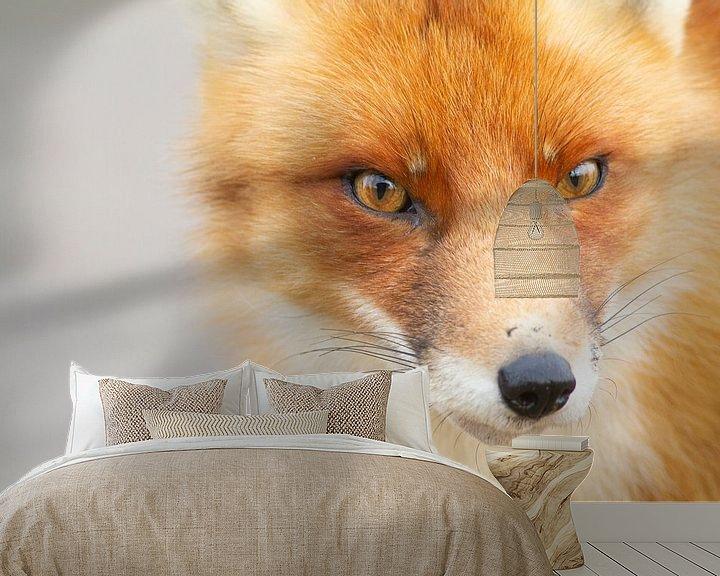 Beispiel fototapete: Fox von Wesley Poelman