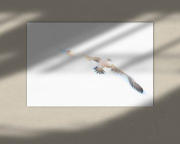Ein abstrakter Eindruck von einem Gannet im Flug 2 von Danny Budts