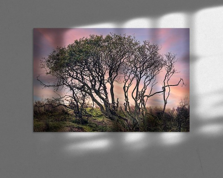 Sfeerimpressie: Een duistere boom in een kleurrijke natuurlijke omgeving van Steven Dijkshoorn