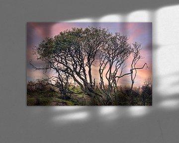 Un arbre sombre dans un environnement naturel coloré