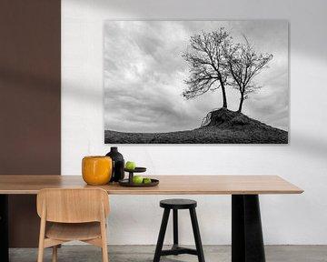 Le minimalisme des arbres comme paysage en noir et blanc
