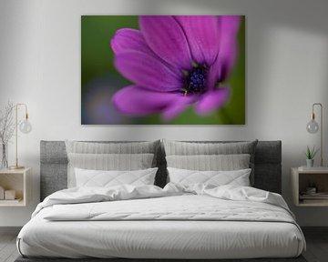Blume 5 von Esther Erkelens