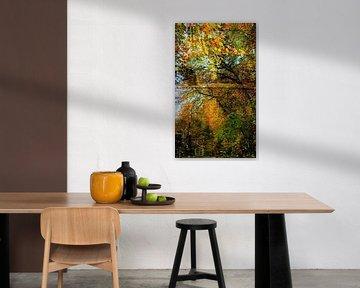 Promenade des couleurs d'automne sur Anita Snik-Broeken