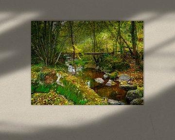 Herfstbeek van Miriam Meijer, en plein campagne.....