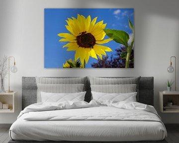 Sonnenblume mit Hummel von Berthold Werner