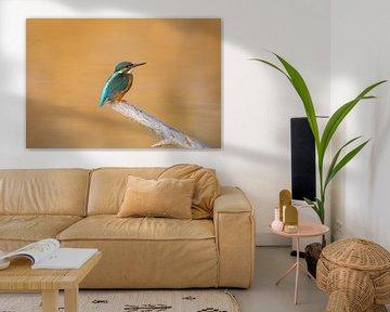 Eisvogel von Michel Van Giersbergen