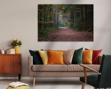 Herfst in het bos van MSP Canvas