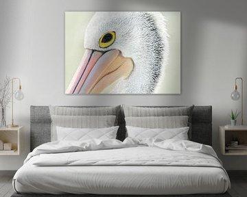 """The Pelican """"In my eye"""" von Vincent Willems"""