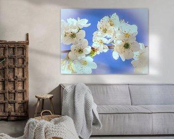 Spring is in the air van Miriam Meijer, en plein campagne.....