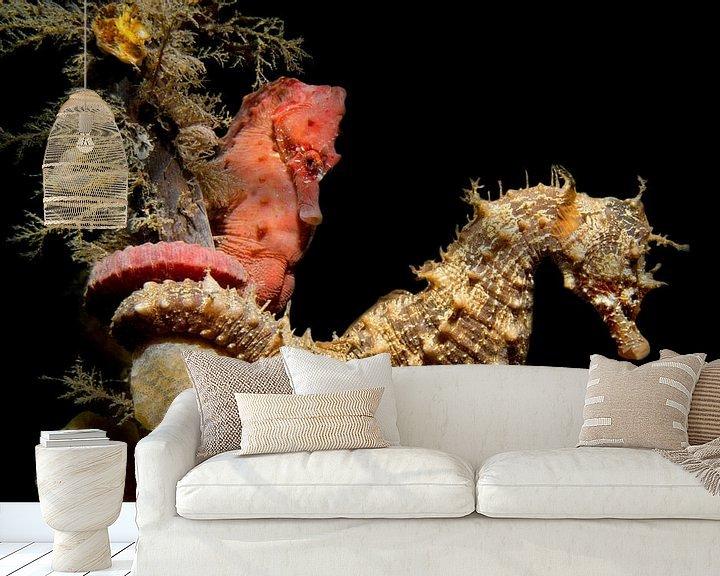 Sfeerimpressie behang: Zeepaardjes in de Oosterschelde van Filip Staes
