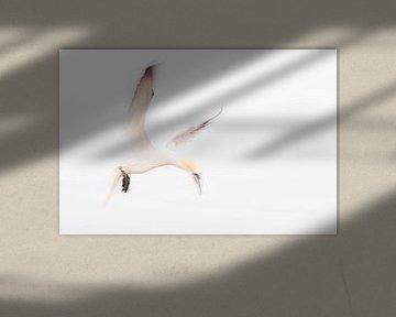 Ein abstrakter Eindruck von einem Gannet im Flug 4 von Danny Budts