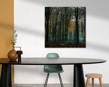 des gélatines forestières spectaculaires