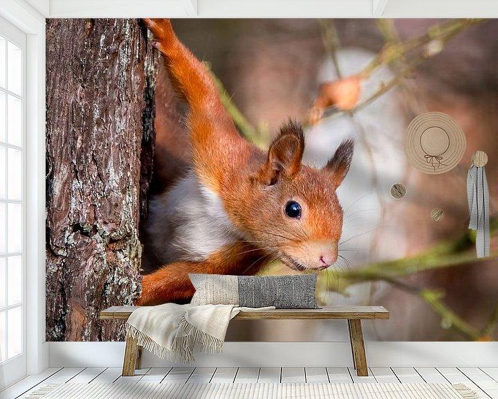 Sfeerimpressie behang: Rode eekhoorn: Kiekeboe van Marjolein van Middelkoop