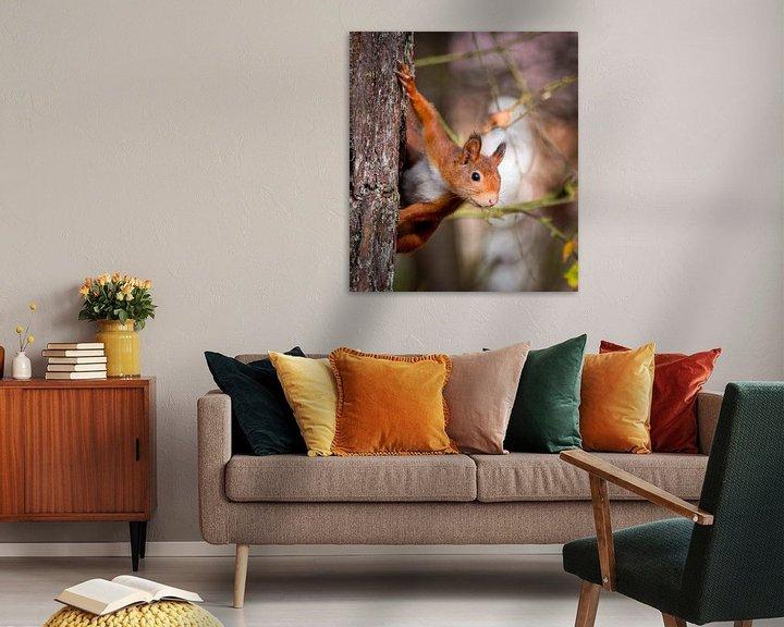 Sfeerimpressie: Rode eekhoorn: Kiekeboe van Marjolein van Middelkoop