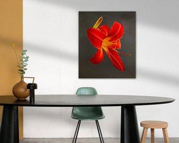 Porträt einer Taglilie von Marijke van Loon