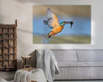 Martin-pêcheur - En un clin d'œil