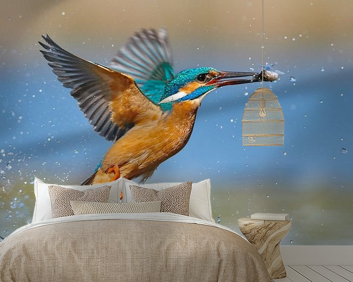 Beispiel fototapete: Eisvogel - Blitzschnell von IJsvogels.nl - Corné van Oosterhout