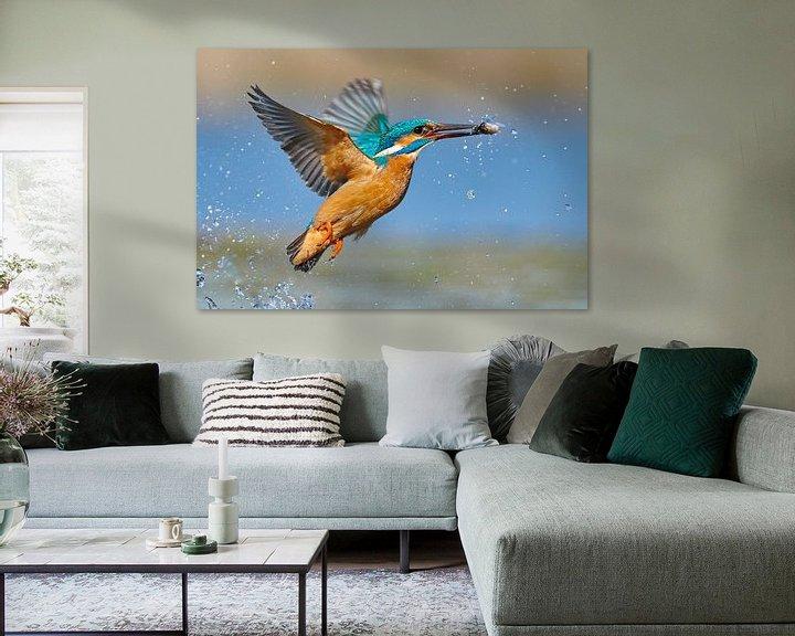 Beispiel: Eisvogel - Blitzschnell von IJsvogels.nl - Corné van Oosterhout