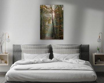 Mistige zonsopkomst in het Zeister bos in Zeist! van Peter Haastrecht, van