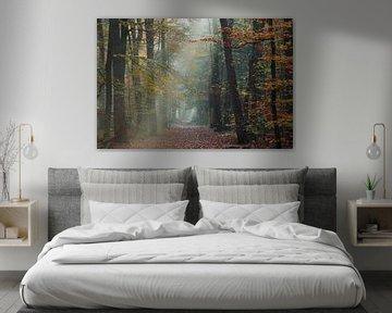 Mistige herfst ochtend Zeisterbos Zeist van Peter Haastrecht, van