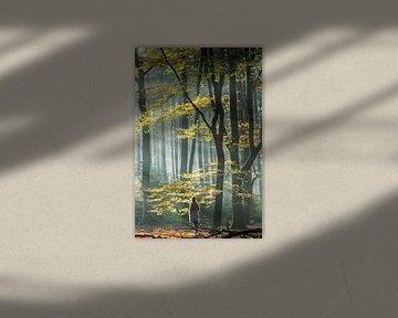 Mistige zonsopkomst in het Speuldersbos van Peter Haastrecht, van