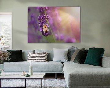 Hummel auf Lavendel im Sonnenlicht von Anam Nàdar