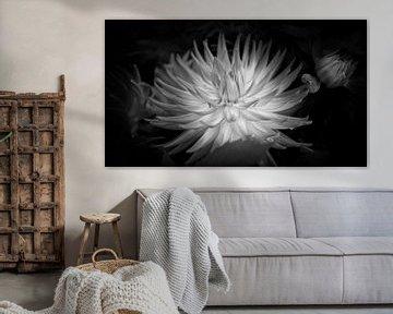Blume von Rene van de Esschert