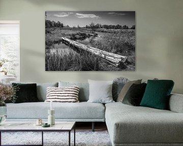 Alde Faenen, Friesland von Rene van de Esschert