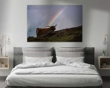 Schote Hooglander met regenboog van Dustin Musch
