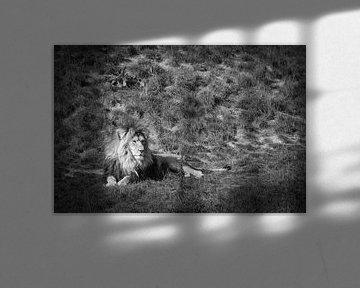 Löwe in Schwarz-Weiß von Rene van de Esschert