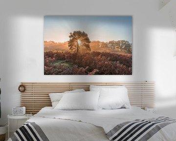 Stralende zonsopkomst op de Brunssummerheide van John van de Gazelle