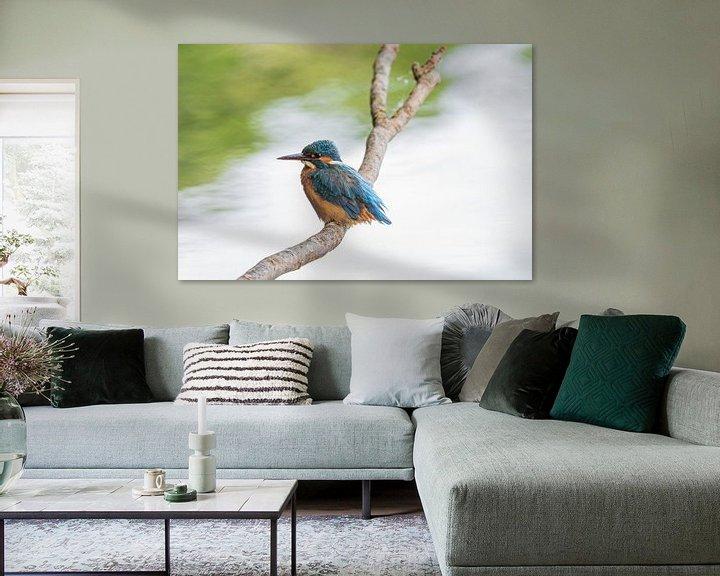 Beispiel: Der Eisvogel an seinem Jagdrevier von Merijn Loch